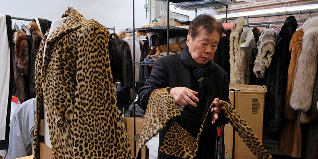 Benjamin Lin looks over a 60-year-old cheetah jacket he is restoring at the B.B. Hawk showroom in San Francisco on March 16, 2018.
