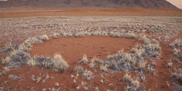 """In this photo provided by Jen Guyton, one of the mysterious """"fairy circles"""" in the Namib Desert that dot the area with circular barren patches.  (Jen Guyton/www.jenguyton.com via AP)"""