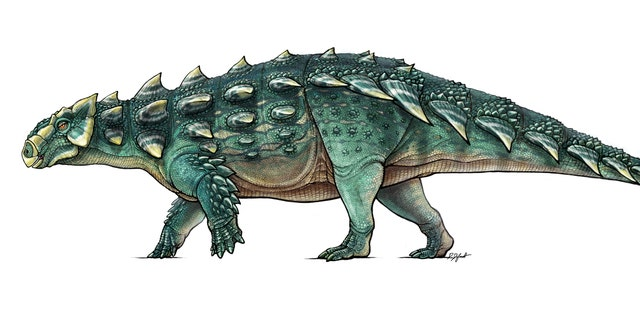 A life recreation of the newly discovered armored dinosaur named Zuul crurivastator from northern Montana seen in this illustration provided by the Royal Ontario Museum in Toronto, Canada, handout photo received May 9, 2017. Illustration by Danielle Dufault/Royal Ontario Museum/Handout via REUTERS