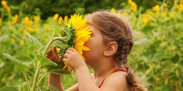 Smell may play a bigger role in human health and behavior than many medical experts realize.