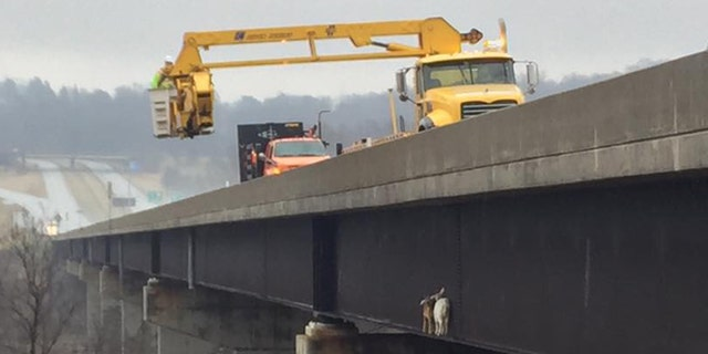 Work crews used a crane to rescue the stranded goats.