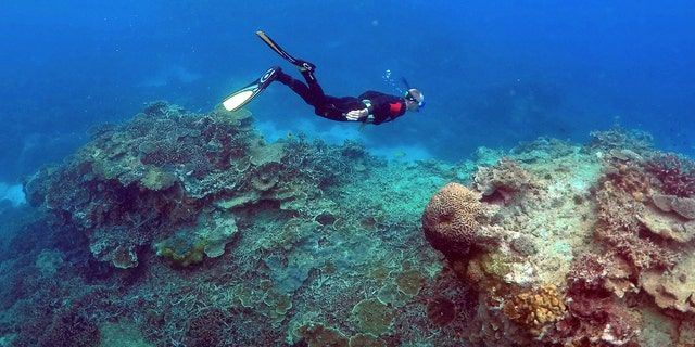 """File photo: A man snorkels in an area called the """"Coral Gardens"""" near Lady Elliot Island, on the Great Barrier Reef, northeast of Bundaberg town in Queensland, Australia, June 11, 2015. (REUTERS/David Gray)"""