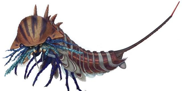 Artistic reconstruction of the tiny sea predator <em>Habelia optata</em>.