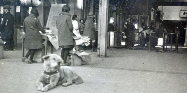 Isamu Yamamoto's photograph of Hachiko the Akita dog is shown. (Courtesy of Takeshi Ando)