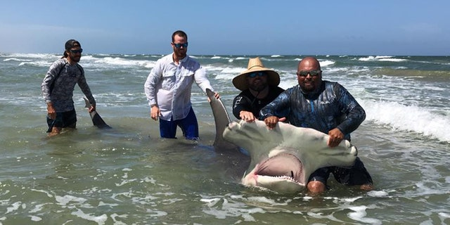 "Poco Cedillo said he noticed the shark was sick, and ""very tired"" when a group of people tried to release it back into the Gulf of Mexico."