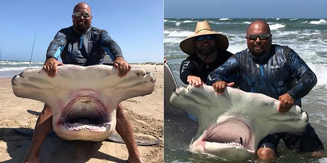 The hammerhead shark was 14 feet long.