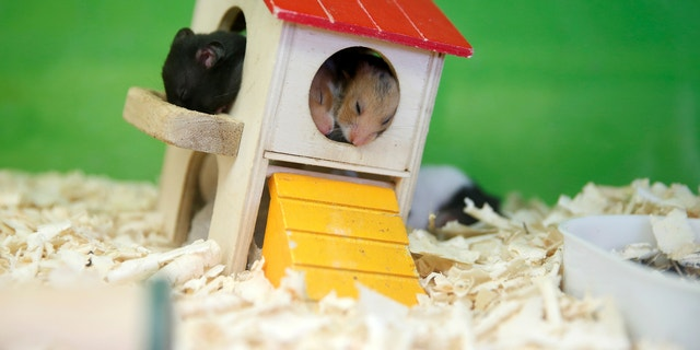 California bans the possession of certain pets, such as hamsters.