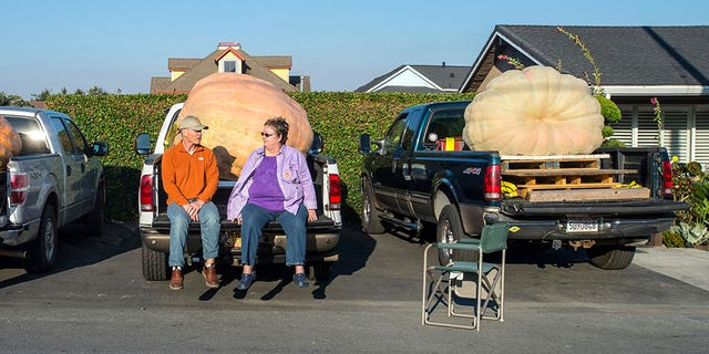 Joel and Mari Lou Holland arrived for the competition with the 2,363-pound pumpkin on the back of a truck.