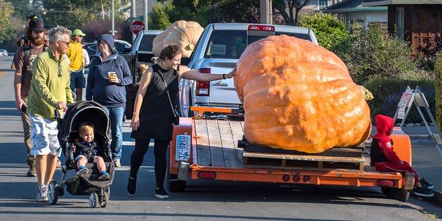 A woman touches a pumpkin on a trailer before the 44th World Championship Pumpkin Weigh-Off.