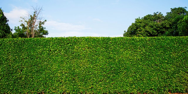 A wall of hedges: Good for privacy, but quite dull.