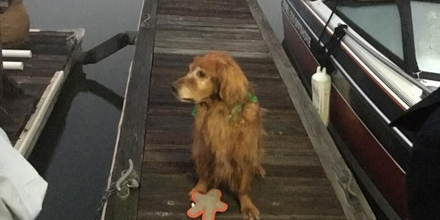 """A Golden Retriever named """"Moe"""" is being hailed as a hero after he woke his owner when a man fell into the water at a marina."""