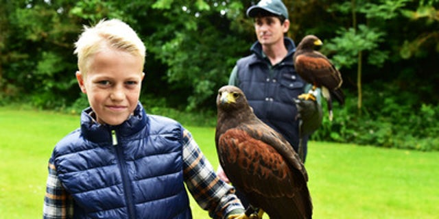 Learn the ancient sport of falconry at Ashford Castle.