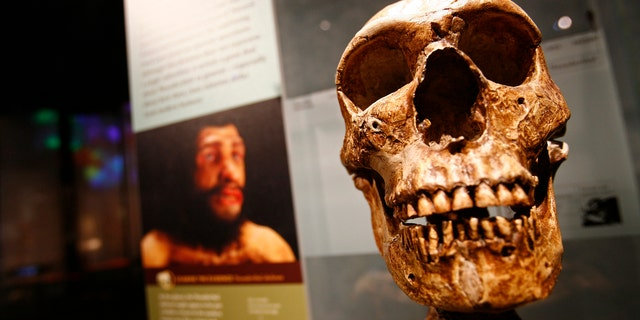 File photo: Skeletal remains from the Anne and Bernard Spitzer Hall of Human Origins at the American Museum of Natural History, a permanent exhibition hall that presents the remarkable history of human evolution from our earliest ancestors millions of years ago to modern Homo sapiens, are seen in New York,February 7, 2007. (REUTERS/Shannon Stapleton)