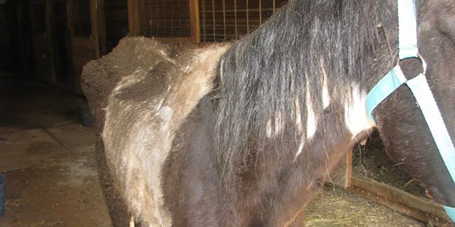 A third horse, whom officers named Jake, was found on the property suffering from starvation, police said.