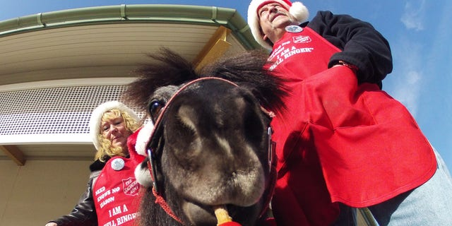 Nov. 17, 2012: In this photo Tinker, a miniature horse, rings a red bell for the Salvation Army outside a craft fair in West Bend, Wis. with his owners Carol and Joe Takacs.