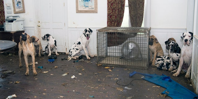 Some of the dogs rescued from Fey's home in Wolfeboro, N.H. in June.