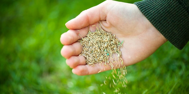 Once you recognize the problem — patchy lawns, thin lawns, etc. — the next step is learning how to seed.