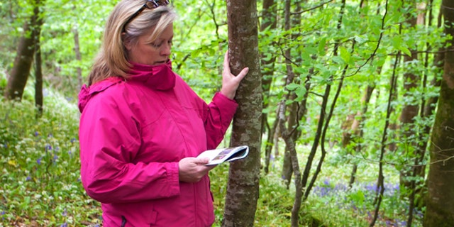 Attractive lady in pink jacket reads a field guide in beautiful woodland carpeted with bluebell wildflowers.