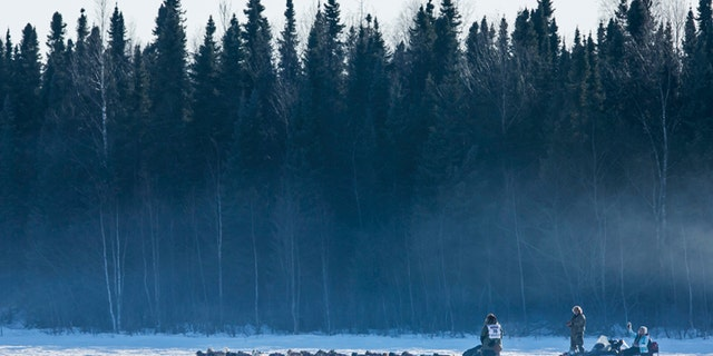 The final starter in the race, Sonny Lindner's team heads into the woods after all the other teams during the official restart of the Iditarod dog sled race in Willow, Alaska, March 2, 2014. The nearly 1,000-mile (1,600-km) Iditarod Trail Sled Dog Race commemorates a 1925 rescue mission that carried diphtheria serum by sled-dog relay to the coastal community of Nome, which remains the final destination in this 42nd edition of the event. REUTERS/Nathaniel Wilder  (UNITED STATES - Tags: SPORT ANIMALS SOCIETY) - GM1EA33185N01