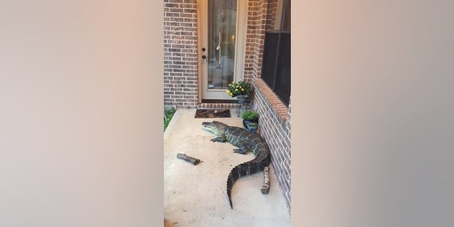 Experts say to stay at least 30 feet from gators, and to call authorities if an issue persists.
