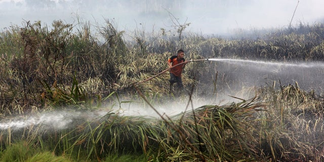 In this Thursday, Sept. 17, 2015 file photo, a fireman sprays water to extinguish wildfire on a peatland field in Ogan Ilir, South Sumatra, Indonesia.