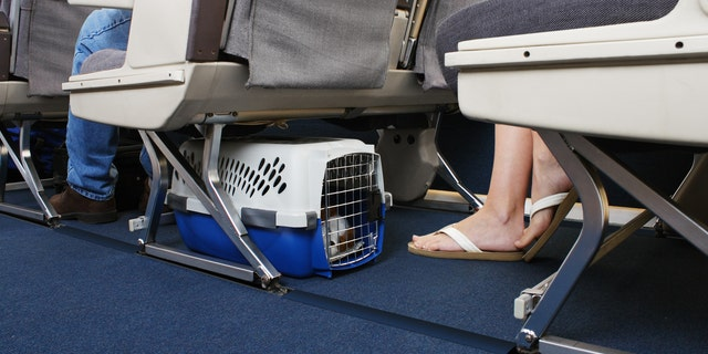There are a couple of options when it comes to bringing your pet on a plane – checking them as cargo or bring them in-cabin and placing them under the seat in front of you.