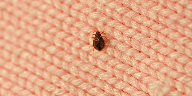 Each bed bug incident can cost upwards of $6,000 for hoteliers, according to a study.