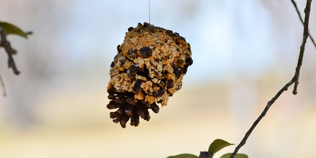Pine cone bird feeders are an easy and fun activity to do with kids.