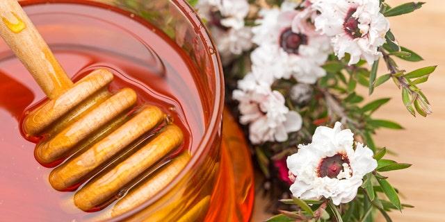 Manuka (New Zealand Tea Tree) Flowers and Honey