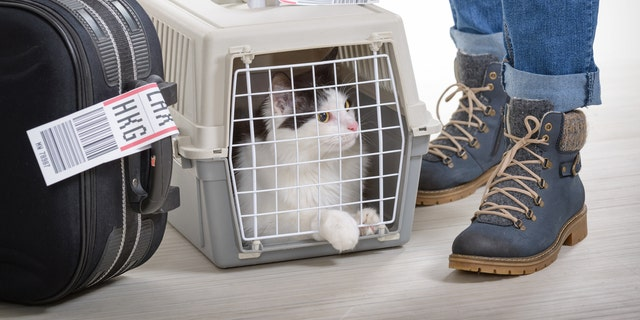 As soon as you arrive, get to a safe place in the airport and examine your pet.