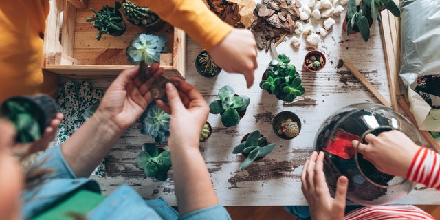For a collaborative effort, start with sprouts and make your own lively succulent box.