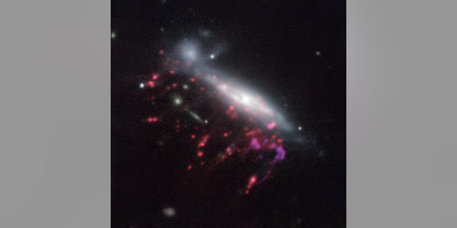 A jellyfish galaxy like this, called JO204 and imaged with ESO's Very Large Telescope in Chile, may have helped cracked the mystery of what feeds supermassive black holes.
