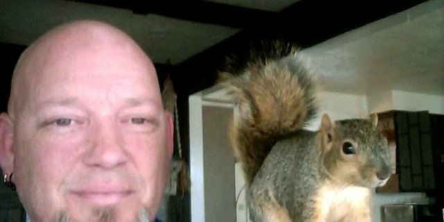 Joey, the squirrel, was found by Adam Pearl of Meridian, Idaho, late last summer. Joey has returned to the wild earlier this month, Pearl said.
