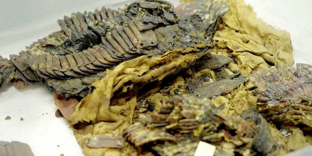 The remains of King Tutankhamun's armor