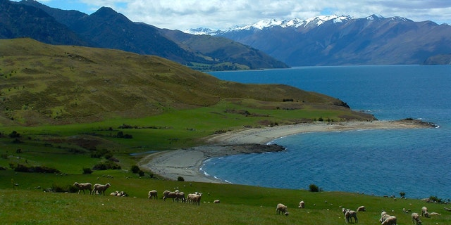 Lauer's ranch was located in an area known as Lake Hawea, in Otago, New Zealand.