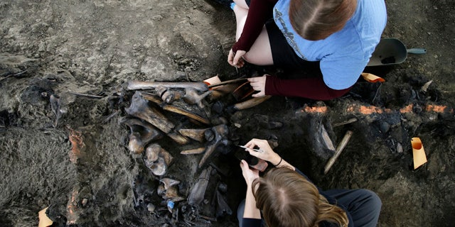 Oct. 23, 2013: Laura Tewksbury, top, and Karrie Howard excavate more than 42,000-year-old bison fossils with dental picks at the La Brea Tar Pits.