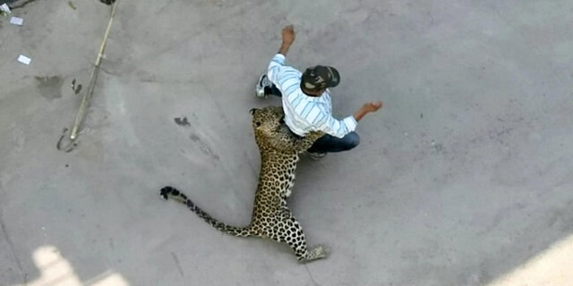 The leopard attack left four people injured.