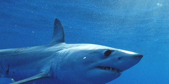 The U.S. Army is funding research on the skin of the mako shark that was presented Monday and could impact how aircraft are built.