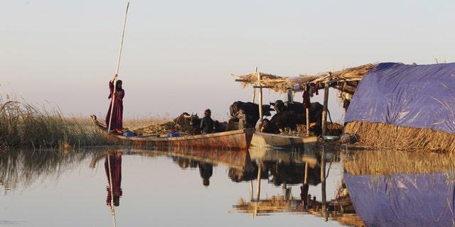 An Iraqi Marsh Arab woman paddles her boat at the Chebayesh marsh in Nassiriya, 300 km (185 miles) southeast of Baghdad.