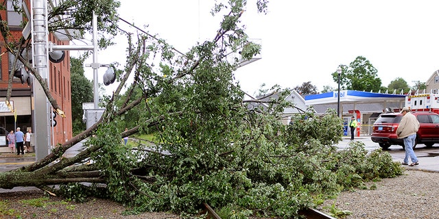 A maple tree was uprooted and toppled onto the railroad tracks on Main Street after a storm passed the area on Saturday in Webster, Mass.