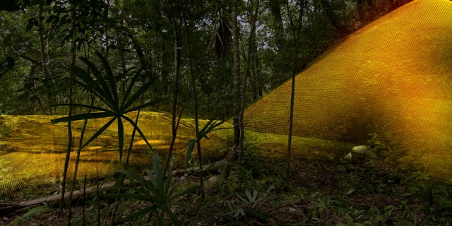 A previously unknown pyramid was spotted in the ancient Maya City of Tikal