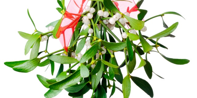 Hanging green mistletoe with a red bow. Isolated on white.