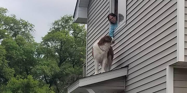 Whiskey was stuck on the roof of his Spring Lake Park home.