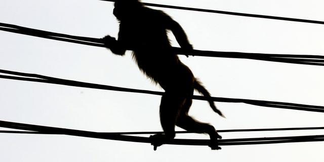 A monkey crosses a crowded street using over-head power lines in New Delhi June 27, 2005. (REUTERS/Desmond Boylan VM/LA)