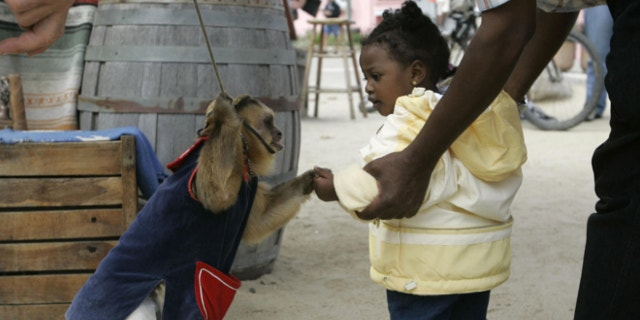 FILE: July 3, 2006: A capuchin monkey shakes hands of a young girl at Fisherman's Wharf in Monterey, Calif.