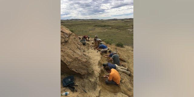 The University of Kansas excavation crew at work