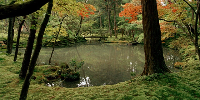 A small lake, surrounded by a carpet of moss inside the famous Moss Garden of Saihoji temple in Kyoto, Japan.