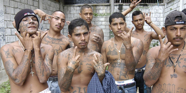 MS 13 started in the prisons of El Salvador, but has spread throughout the continent.