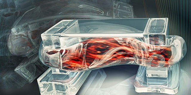 Tiny walking bio-bots are powered by muscle cells and controlled by an electric field.