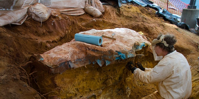 The stone slab found on NASA's Goddard campus (Credit: NASA/GSFC/Rebecca Roth)